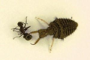 Tod der Ameise