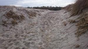 Durch Sand und Tränen...